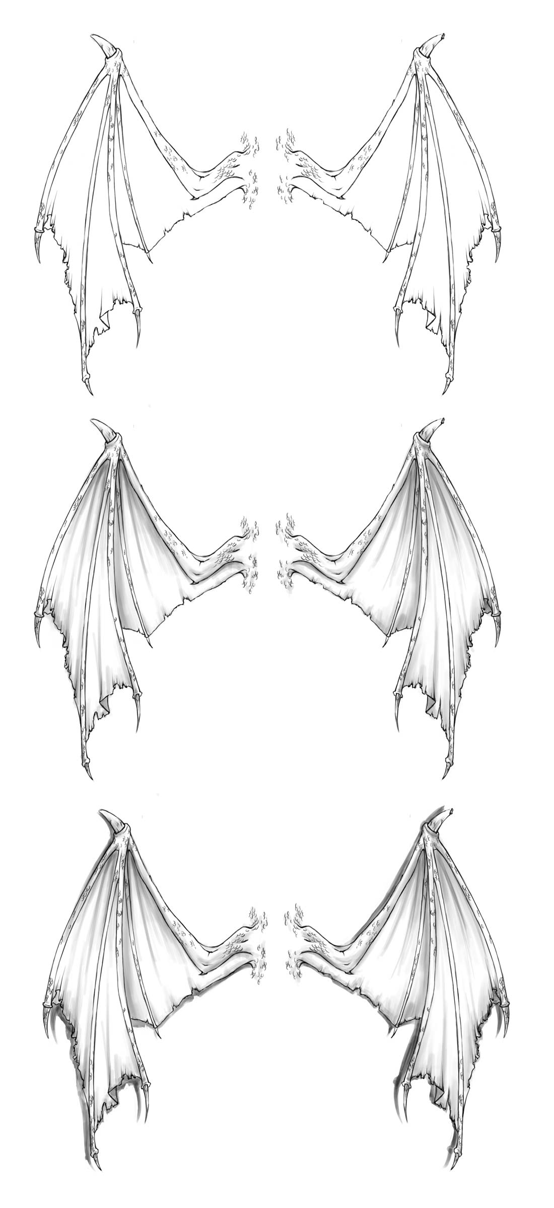 Dragon wings drawing reference