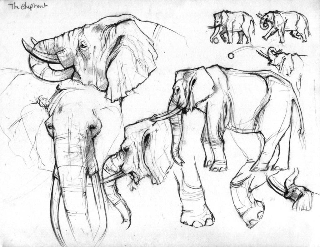 Elephant drawing reference