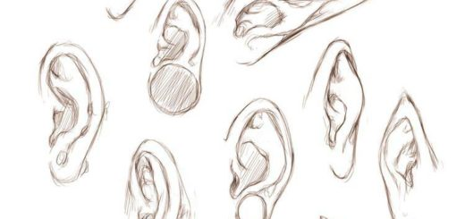 Elf Ear drawing reference