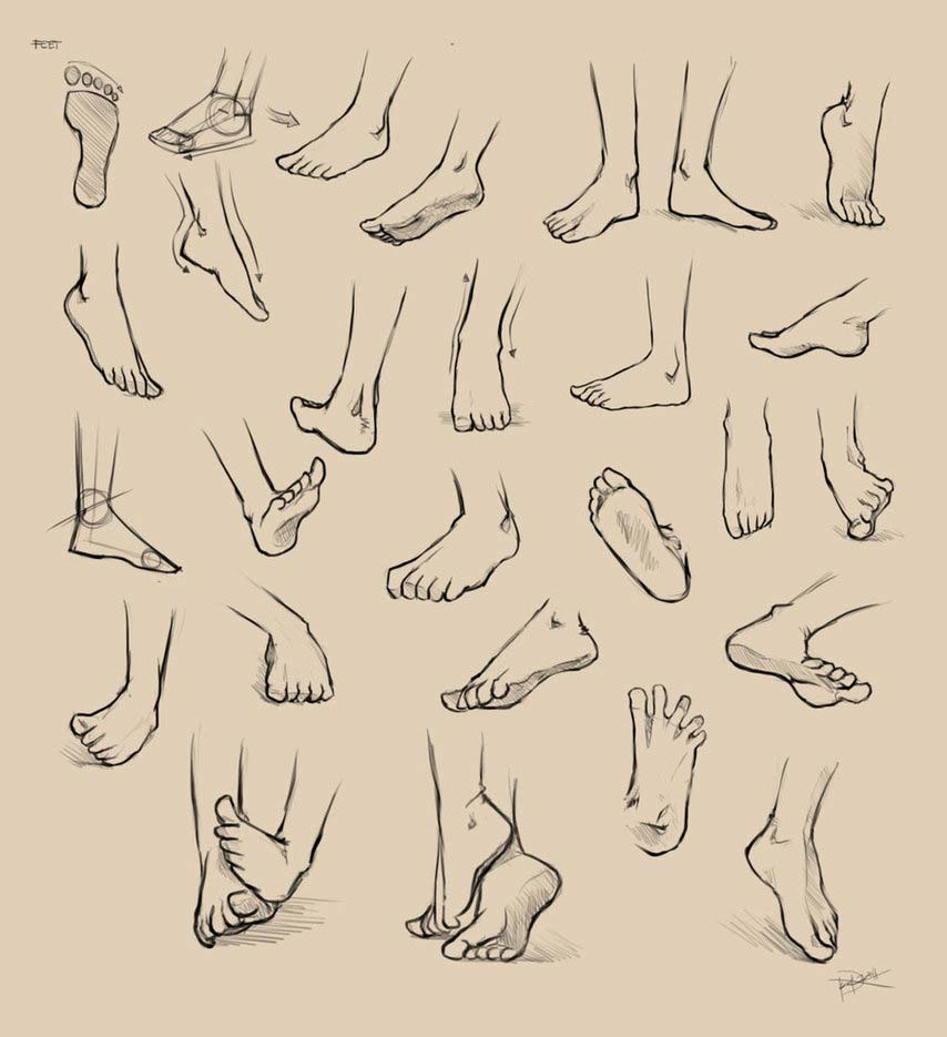Feet drawing reference