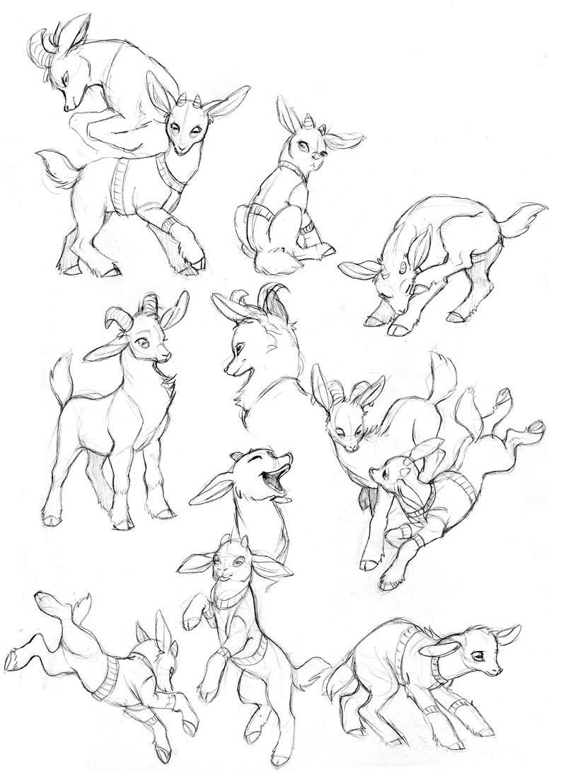Goat drawing reference
