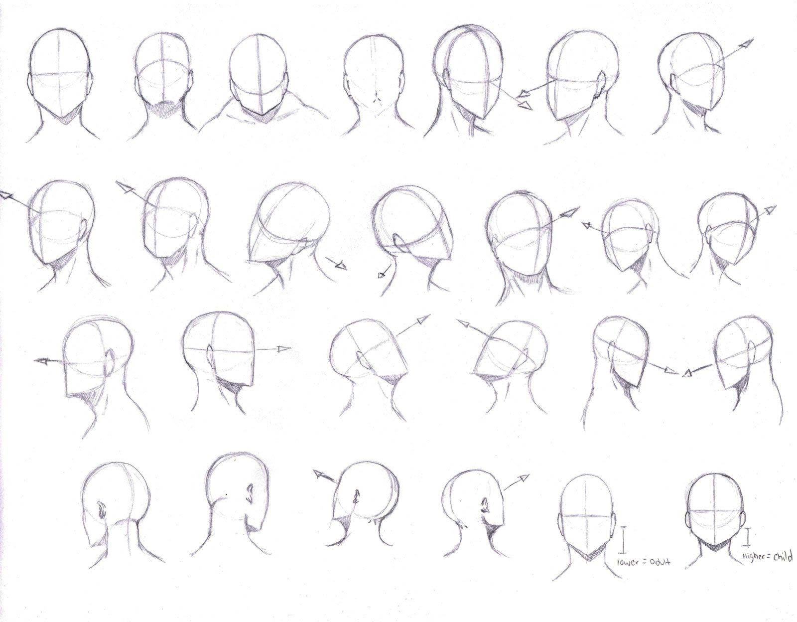 Head drawing reference