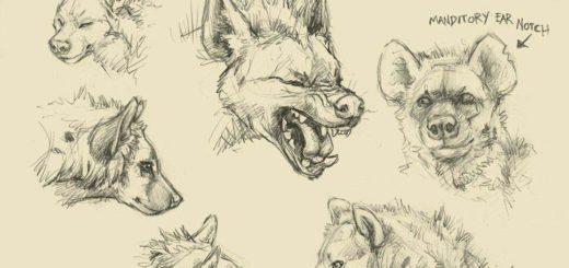 Hyena drawing reference