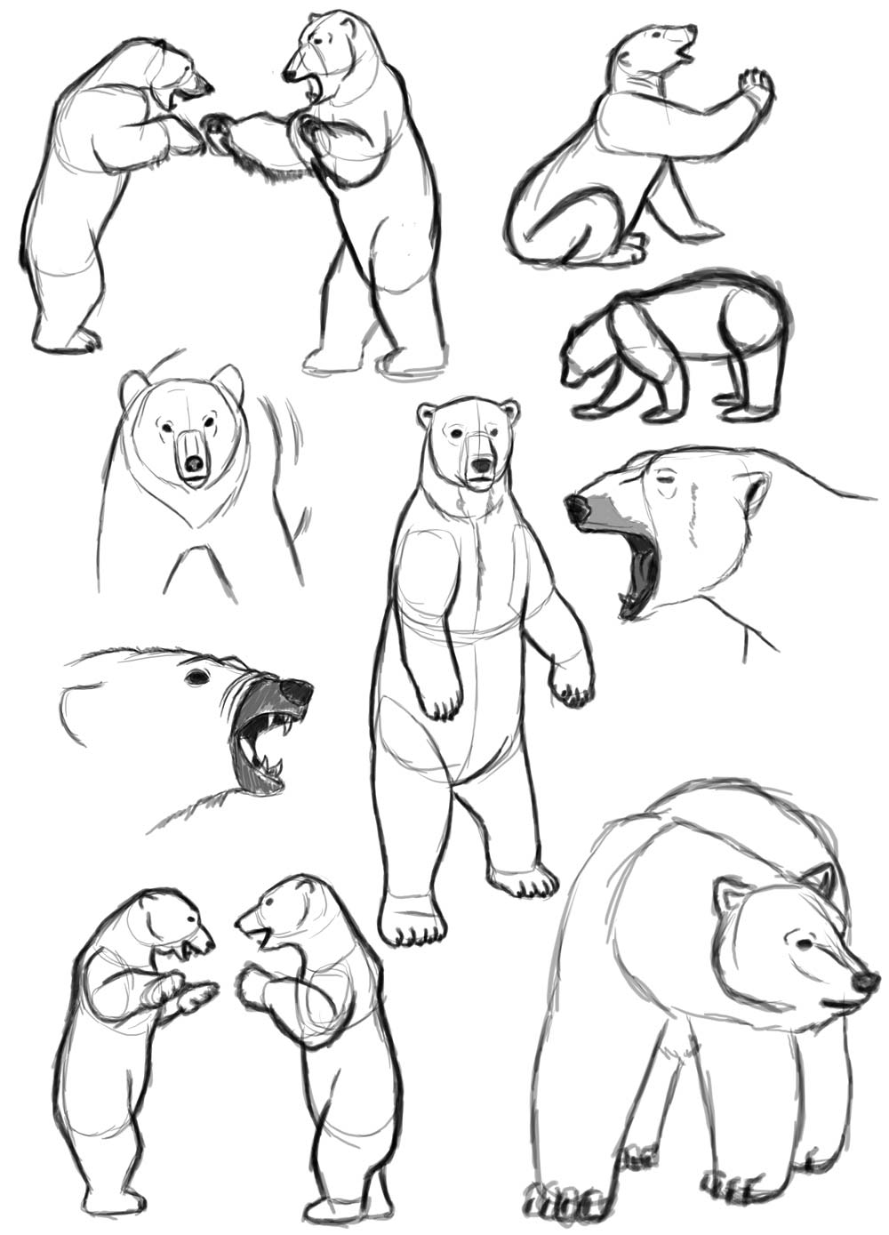 Polar bear drawing references