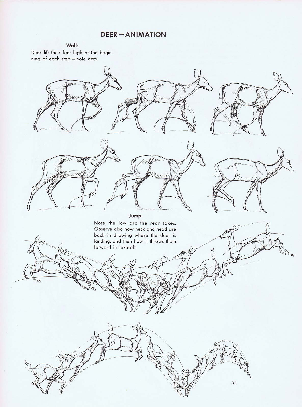 Deer jumping drawing reference