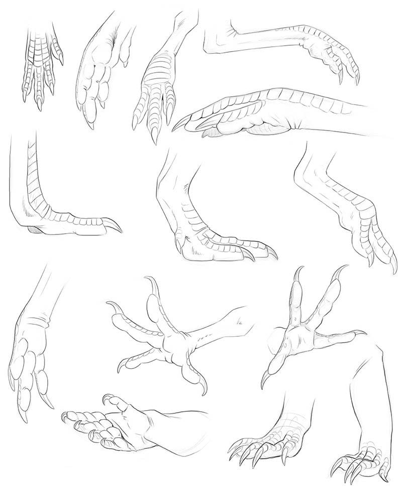 Dragon limbs drawing reference