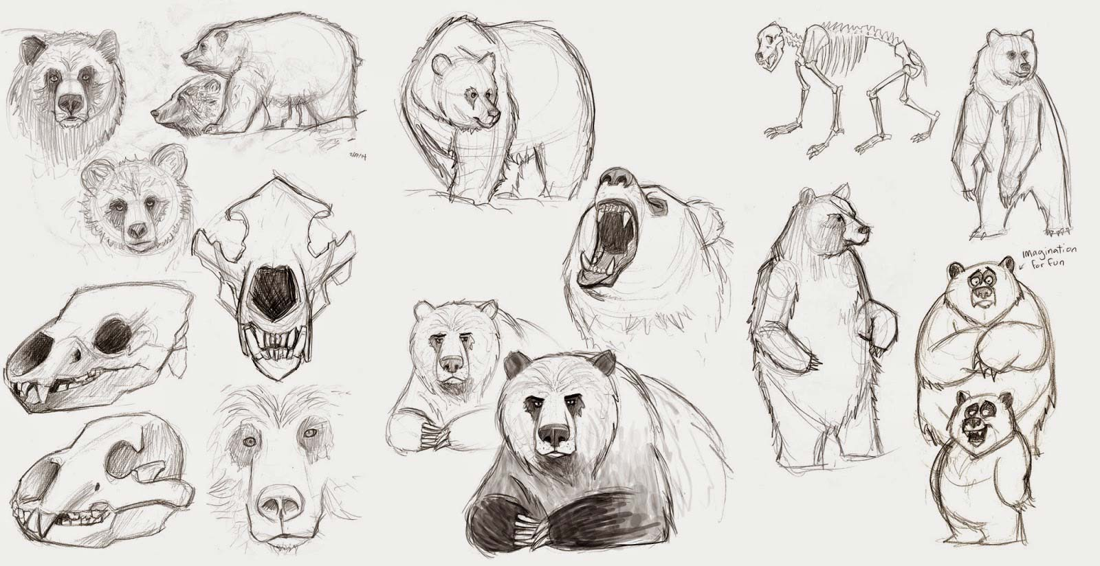 Grizzly bear drawing reference