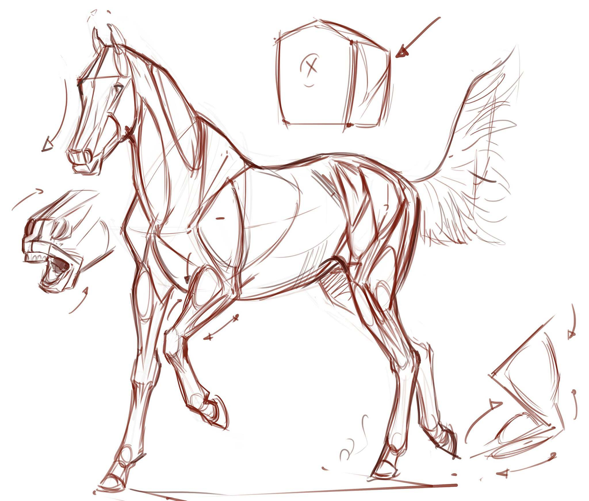 Horse Drawing Reference And Sketches For Artists