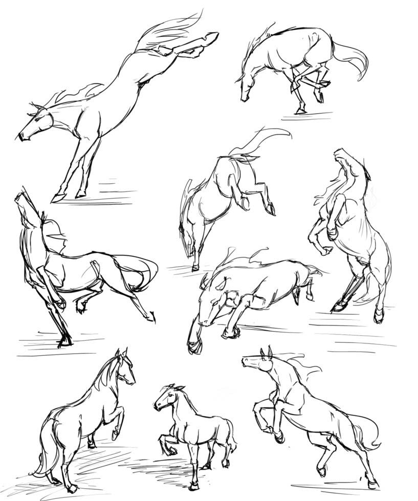 Horse drawing reference
