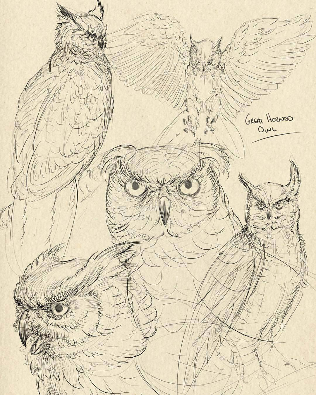 Owl drawing reference