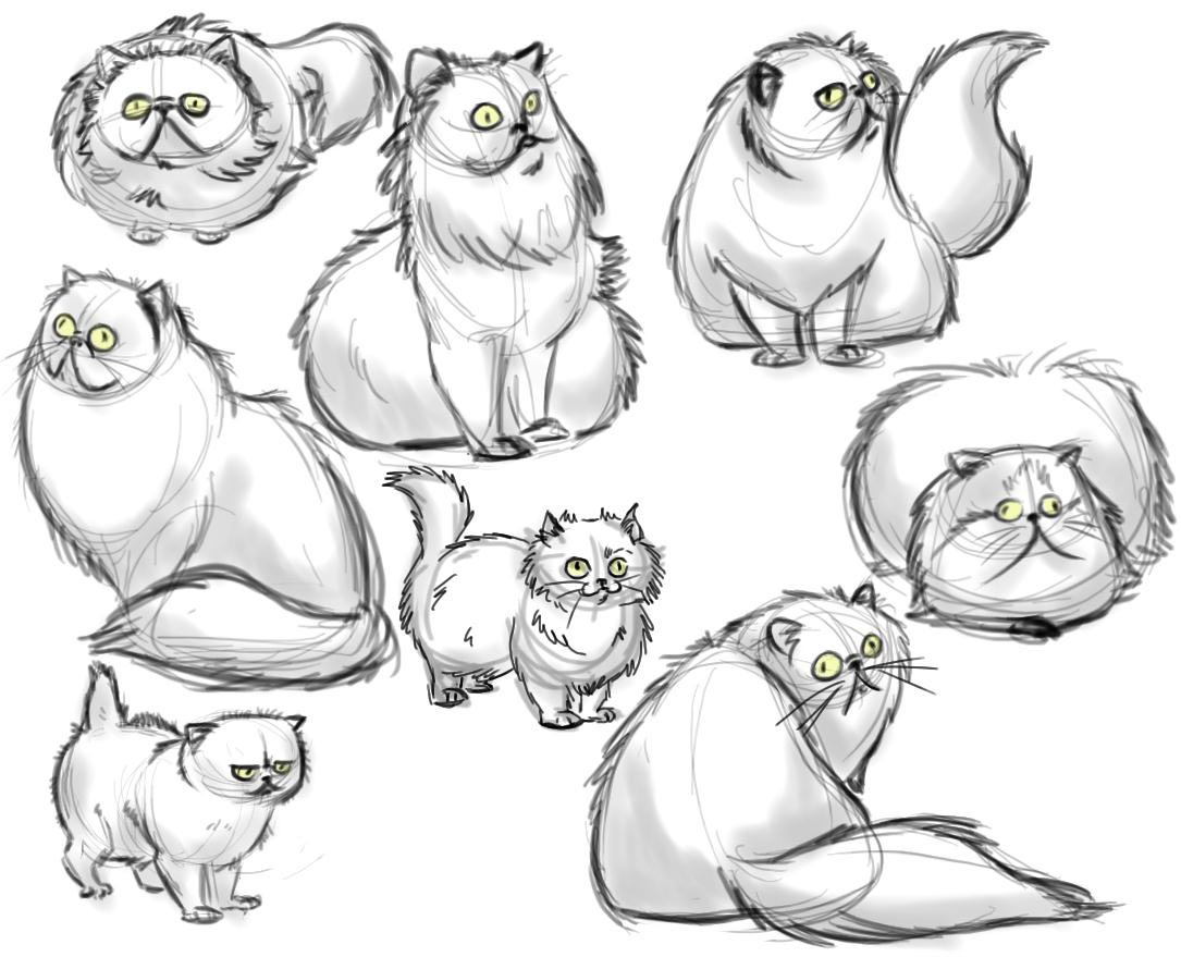 Persian cat drawing reference