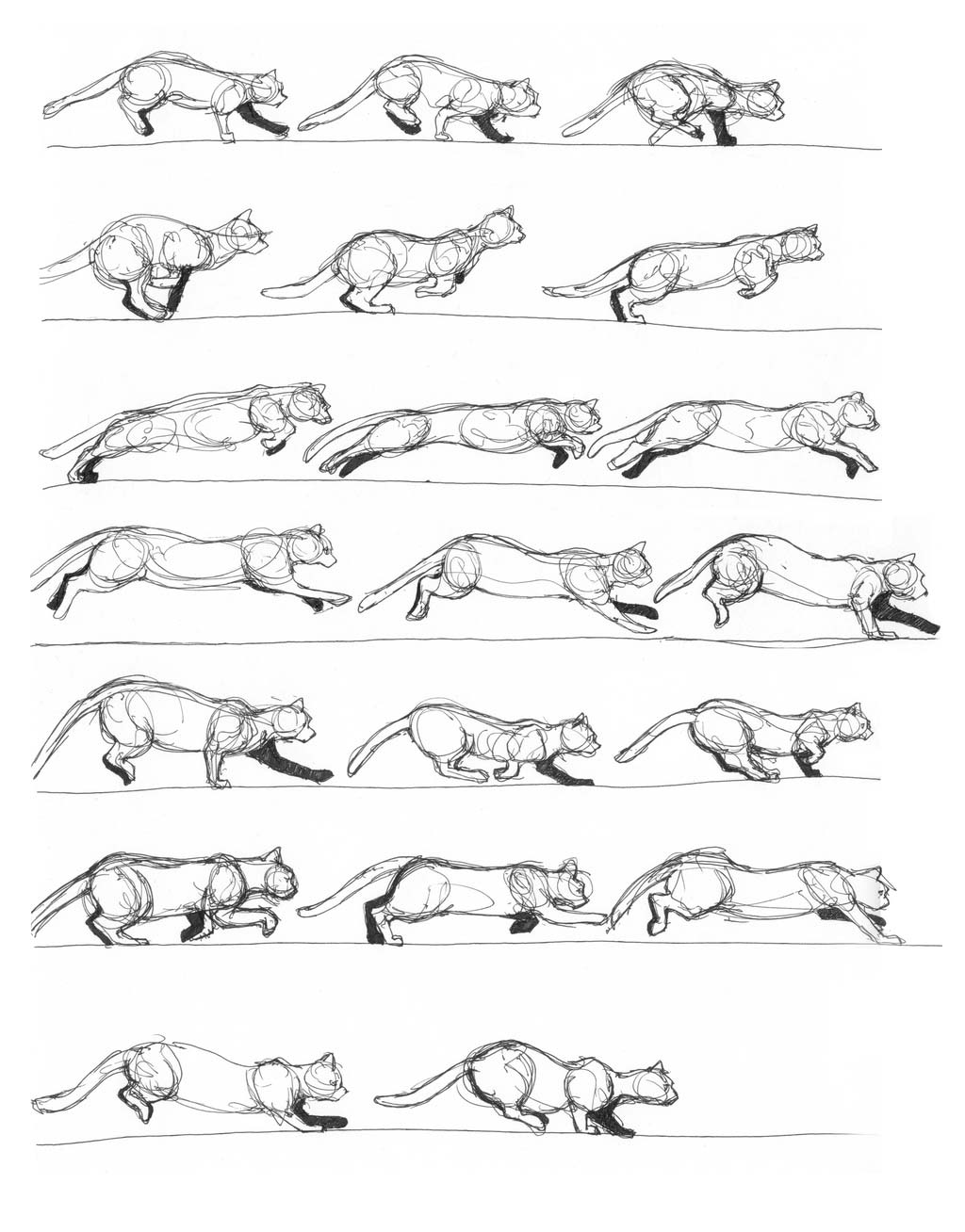Cat running drawing
