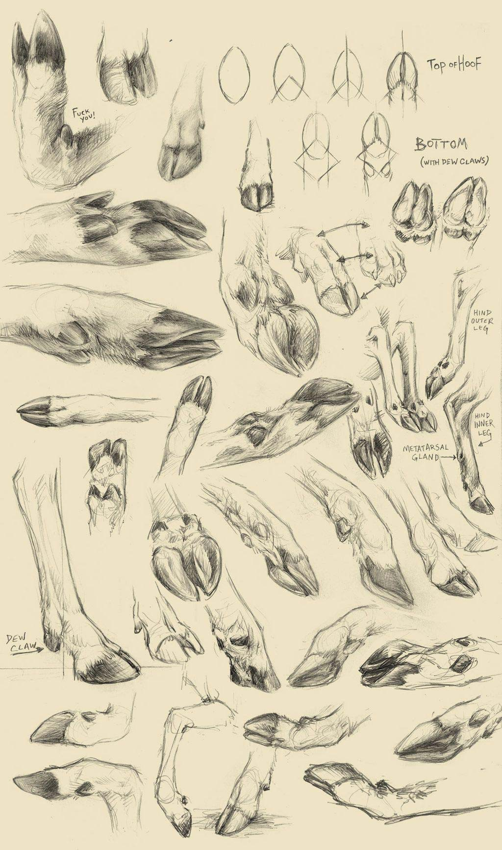 Deer hooves drawing reference