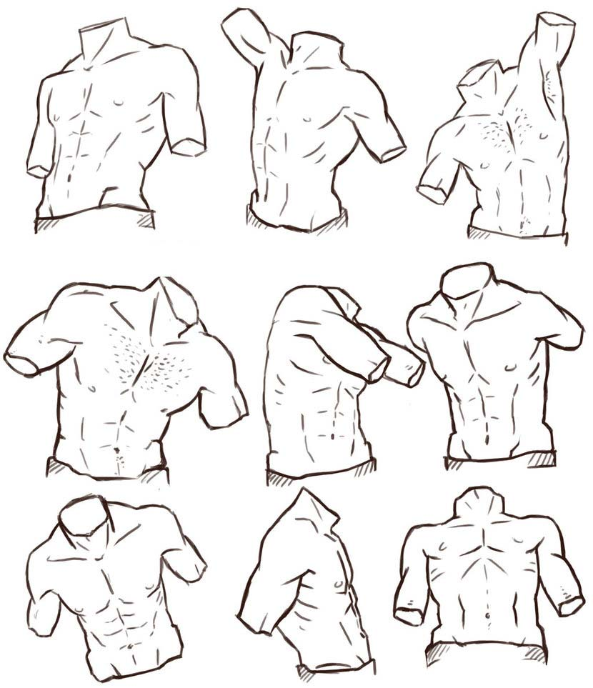 Male Torso drawing reference