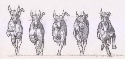 Running dog drawing reference