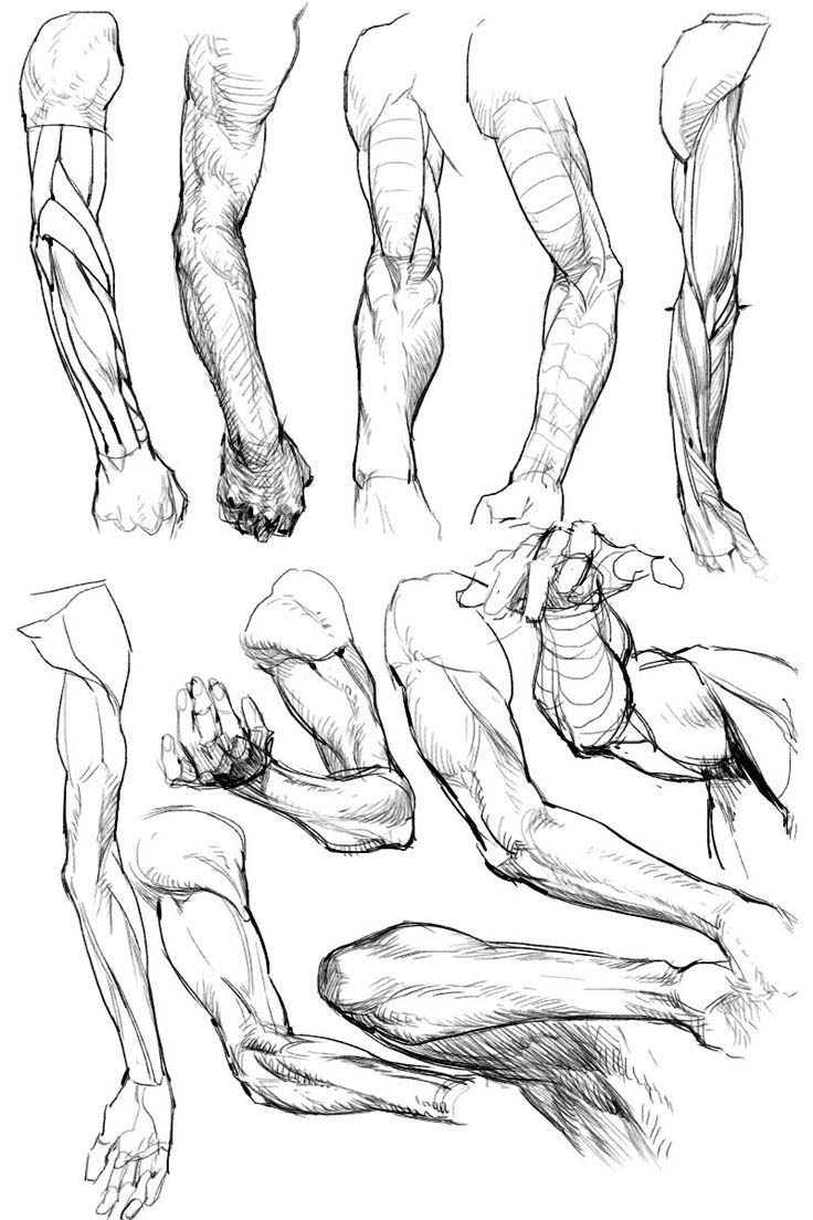 Arms drawing reference