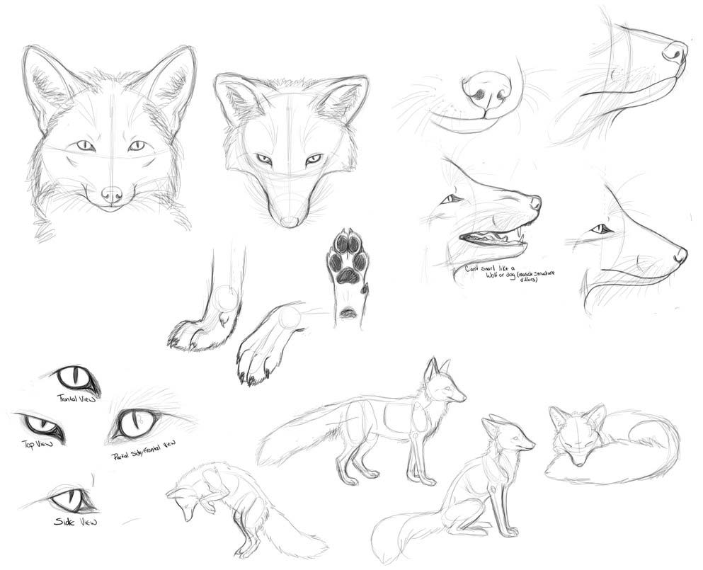 Fox drawing reference