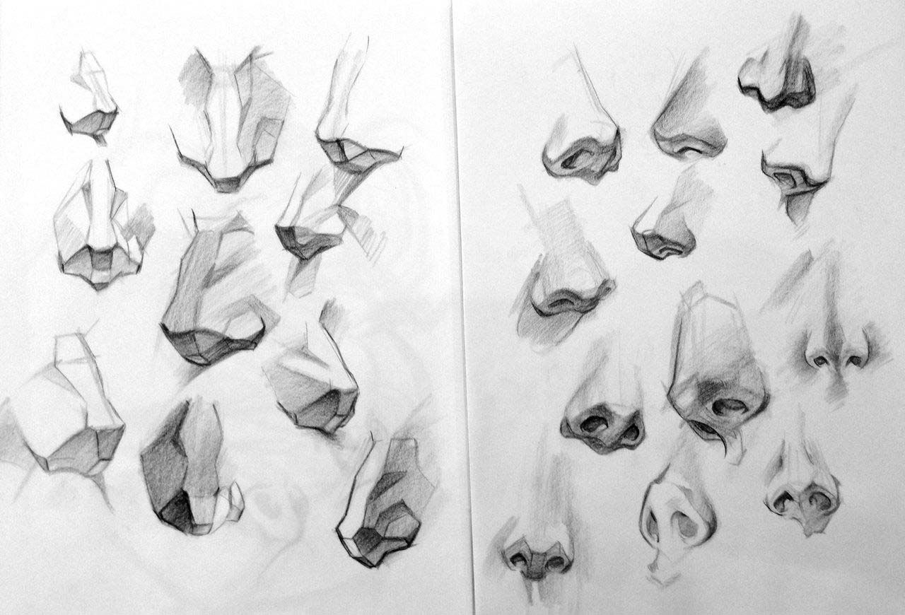 Nose drawing reference