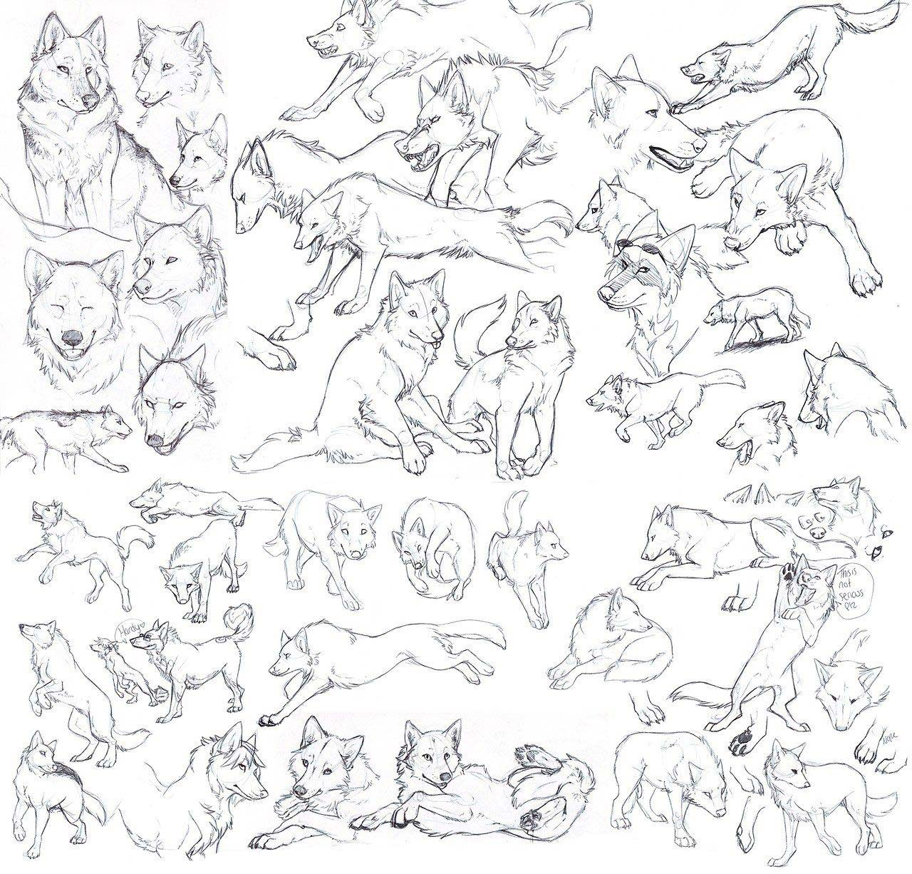 Wolf Drawing Reference And Sketches For Artists