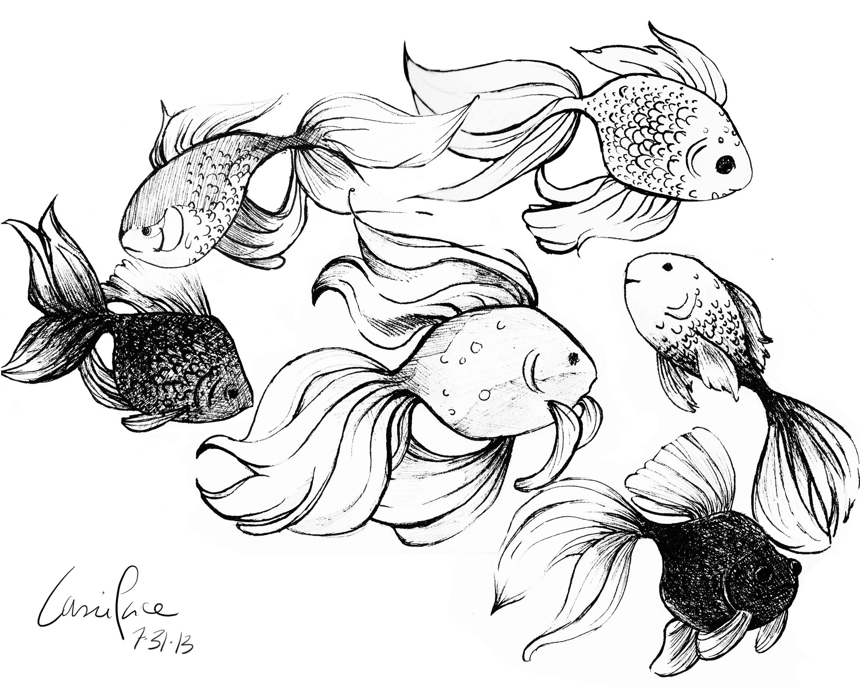Goldfish drawing reference