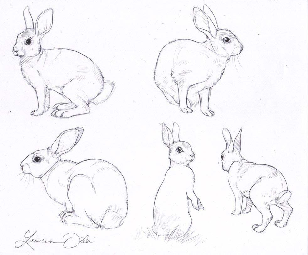 Bunny drawing reference