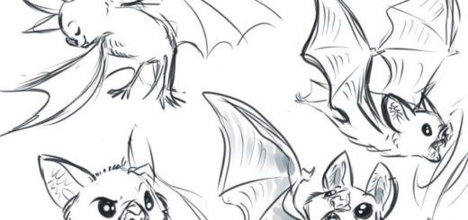 Bat drawing reference