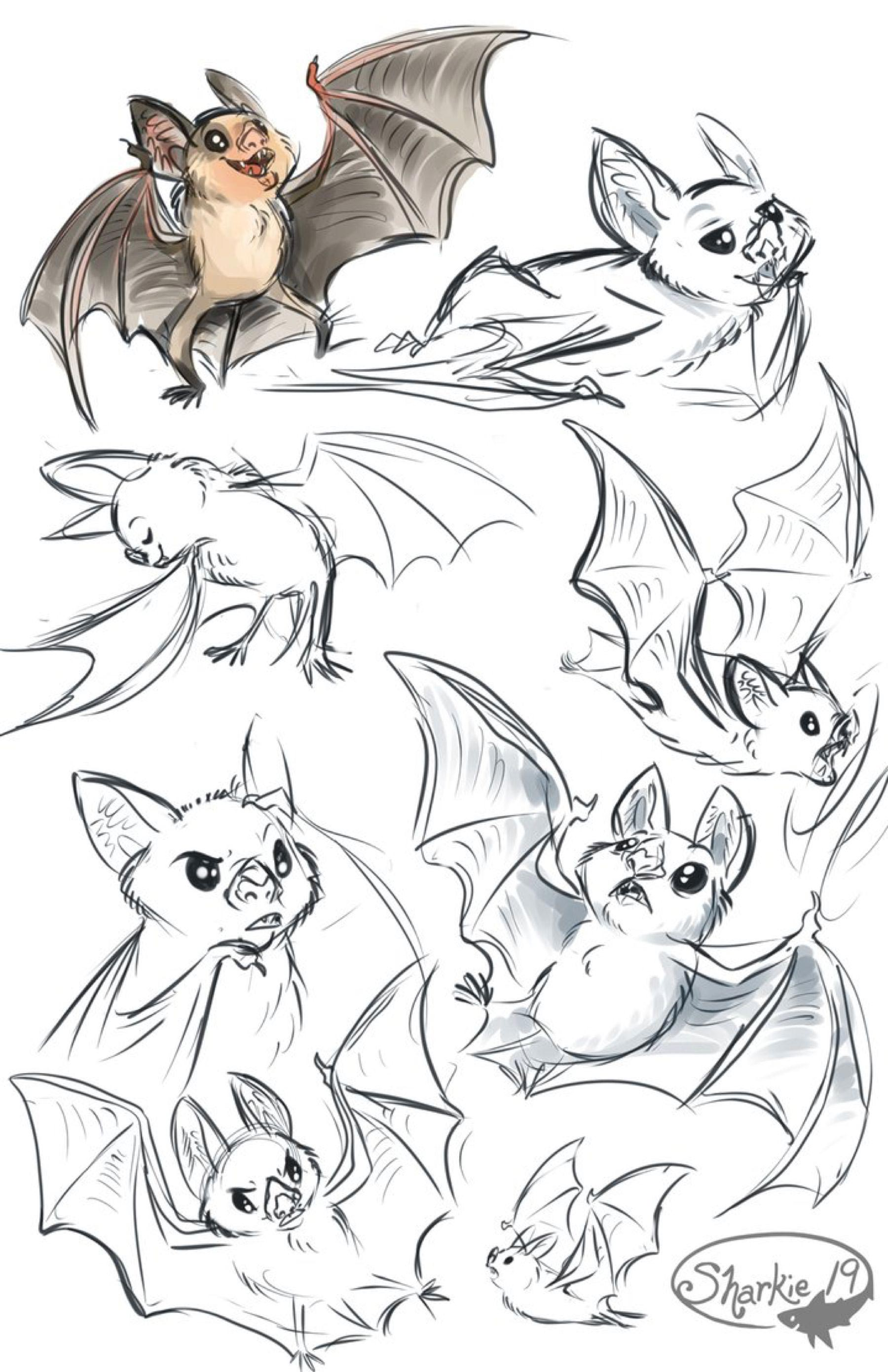 Bat drawing reference