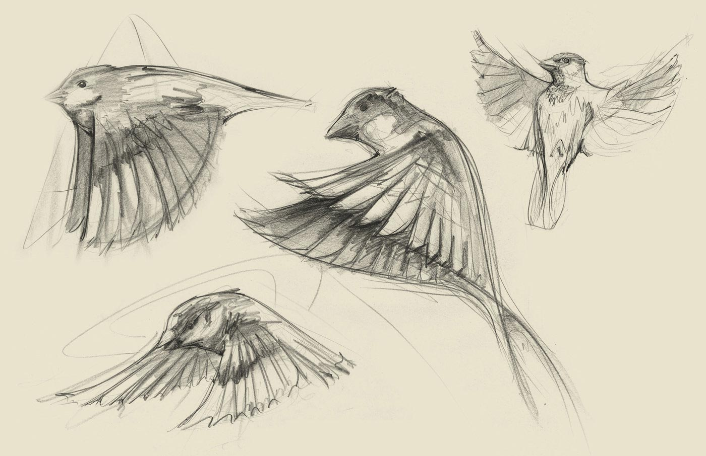 bird wing drawing reference