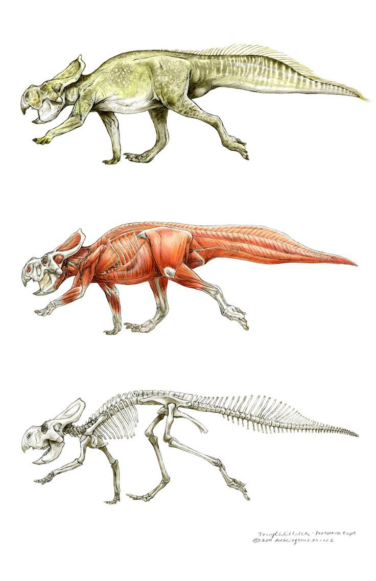 Dinosaurs drawing reference