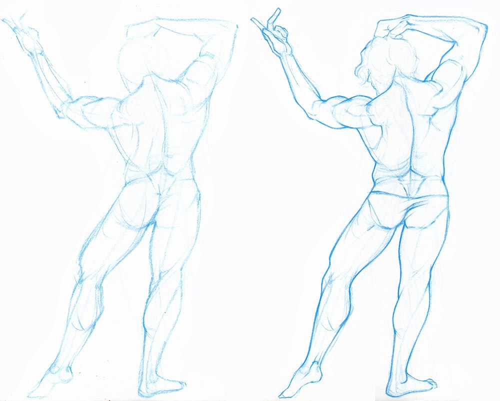 Male back torso drawing reference