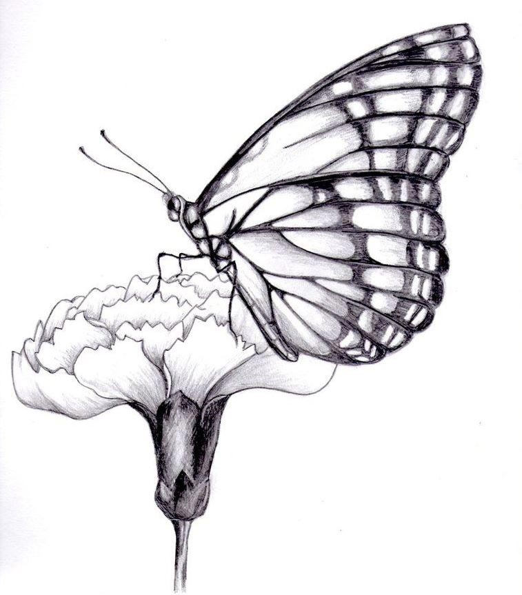 Butterfly drawing reference