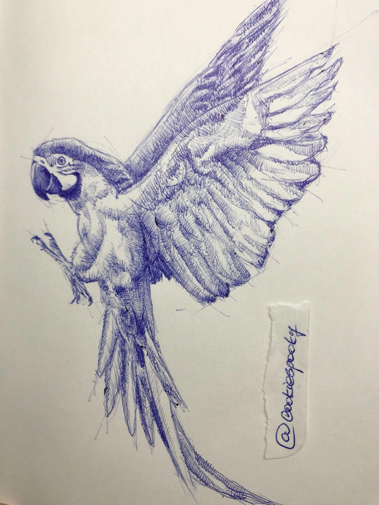 Parrot drawing references