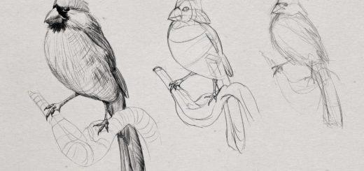 Cardinal drawing reference