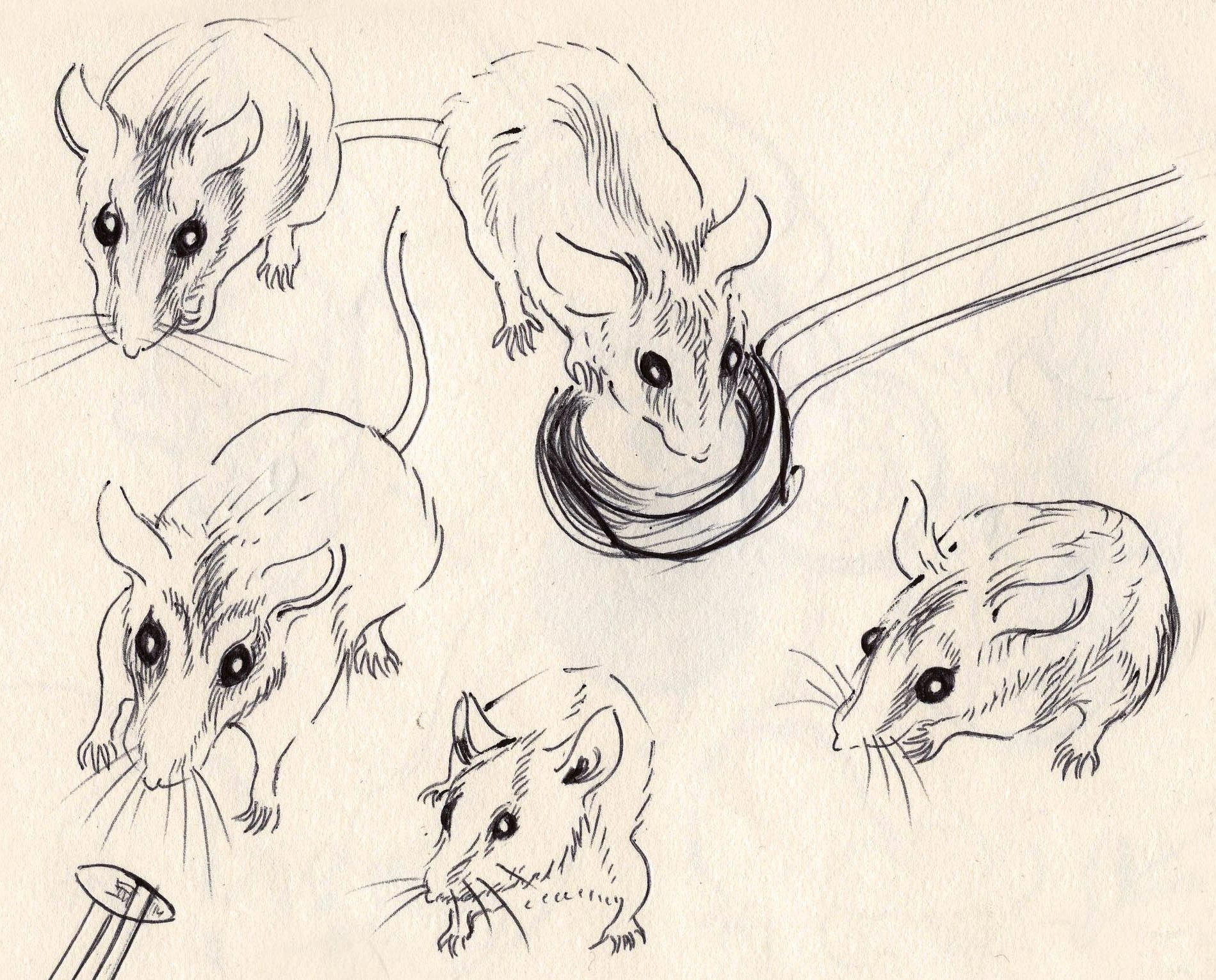 Mouse drawing reference