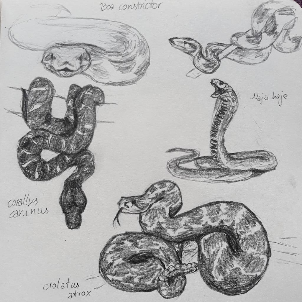 Snake drawing reference