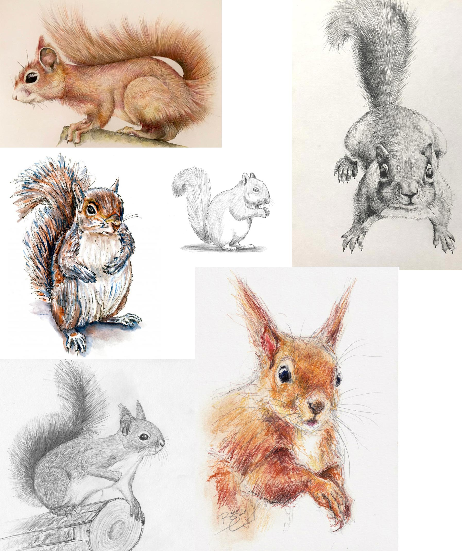 Squirrel drawing reference