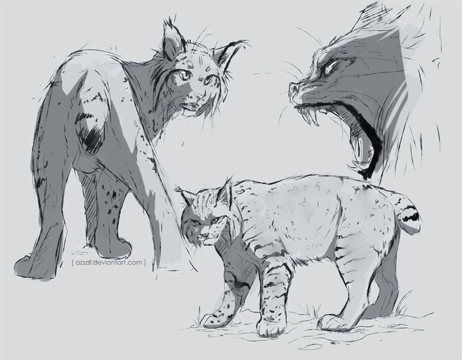 Lynx drawing reference