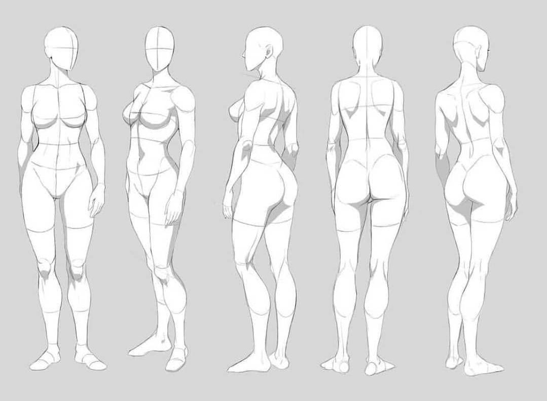 Female torso drawing reference
