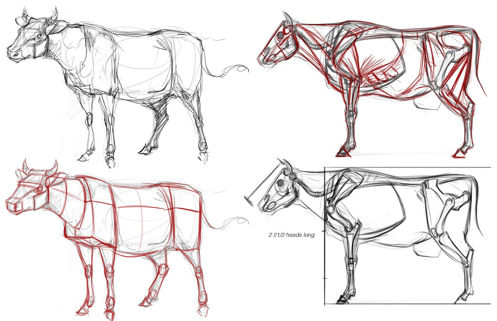 Cow drawing reference