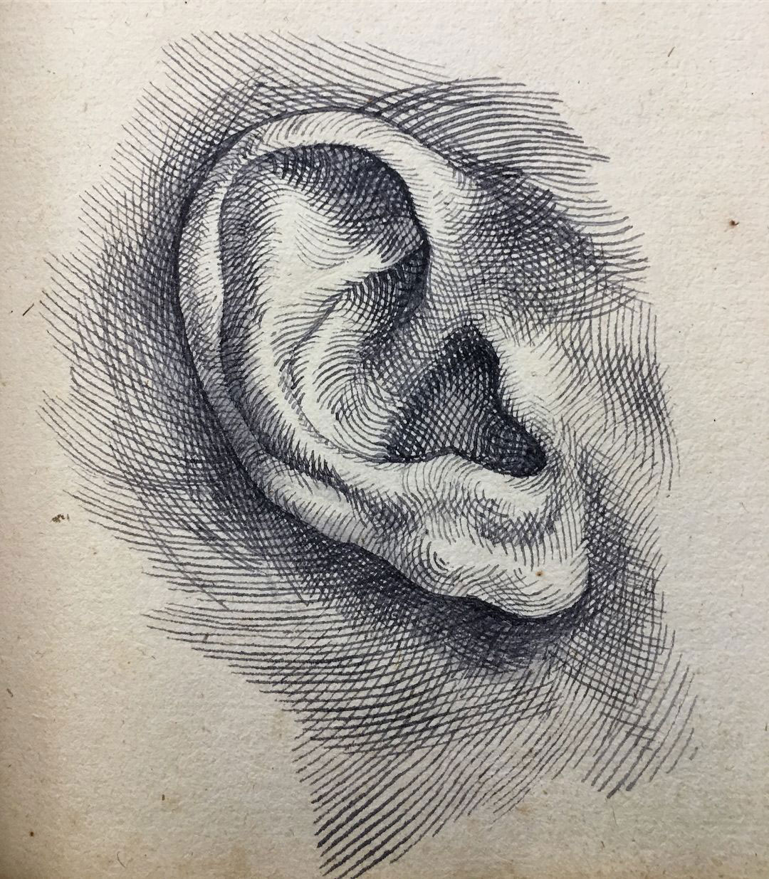 ear drawing reference
