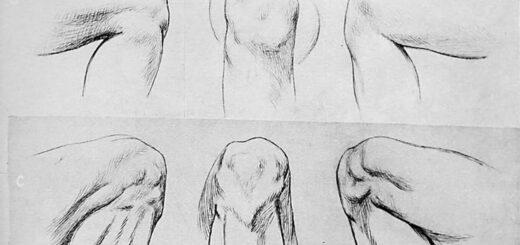 male leg drawing reference