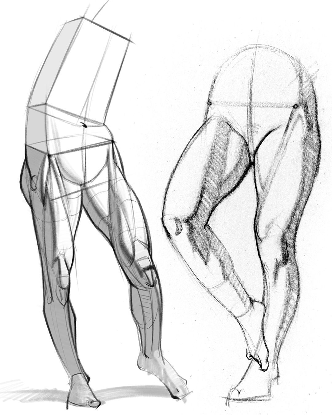 male leg drawing reference