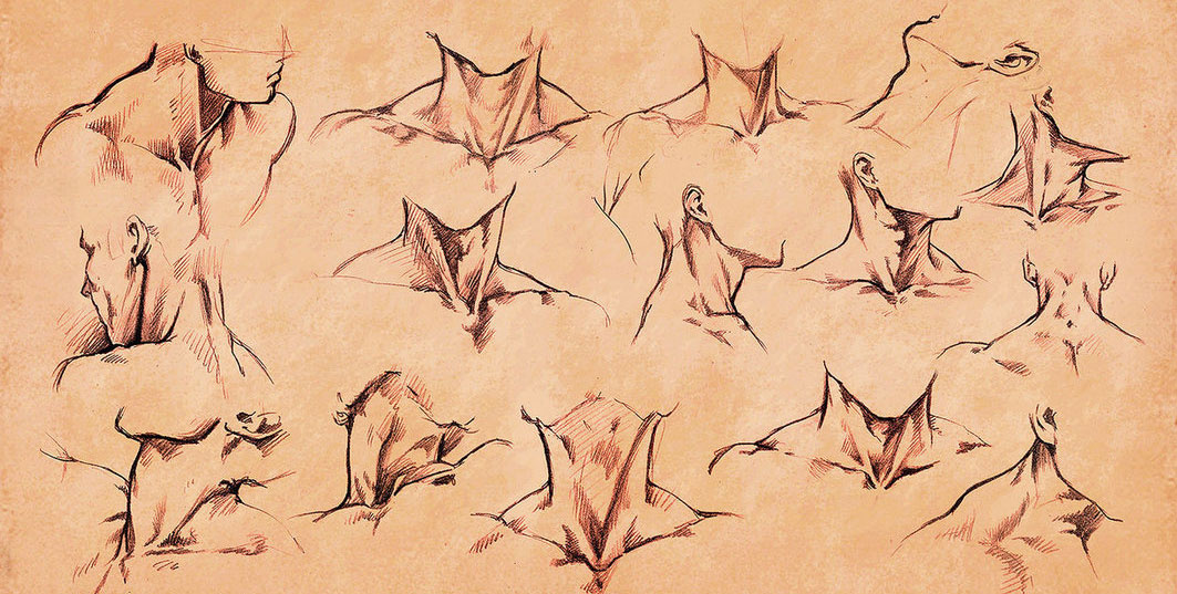 neck drawing reference