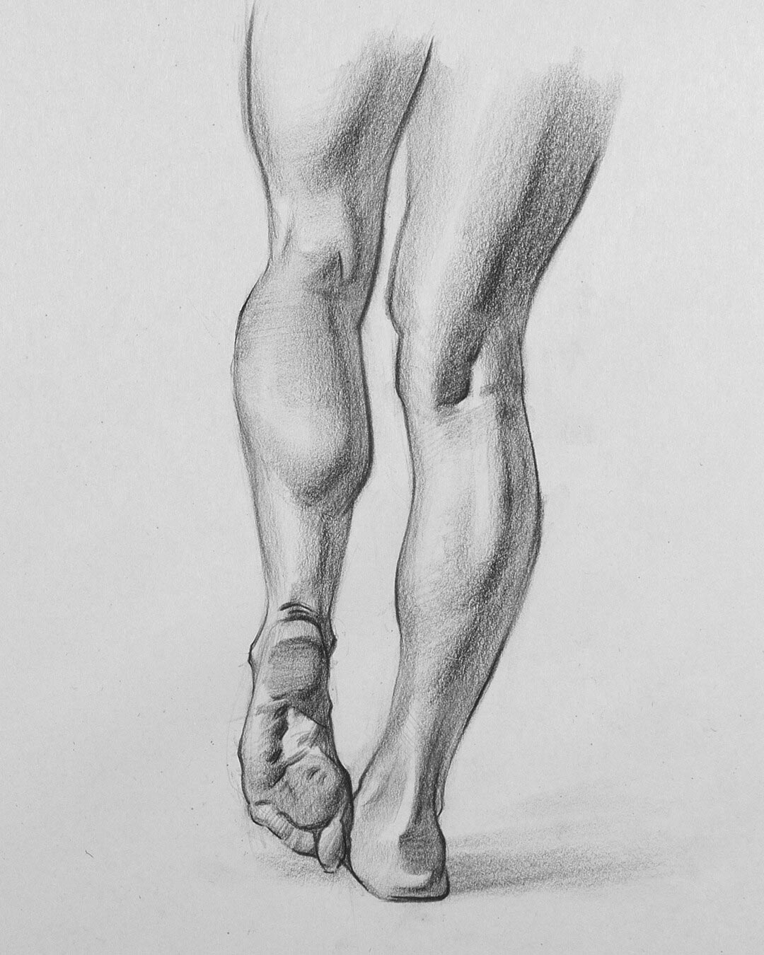 Calf muscle drawing reference