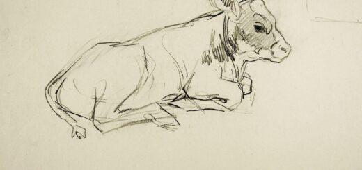 Calf drawing reference
