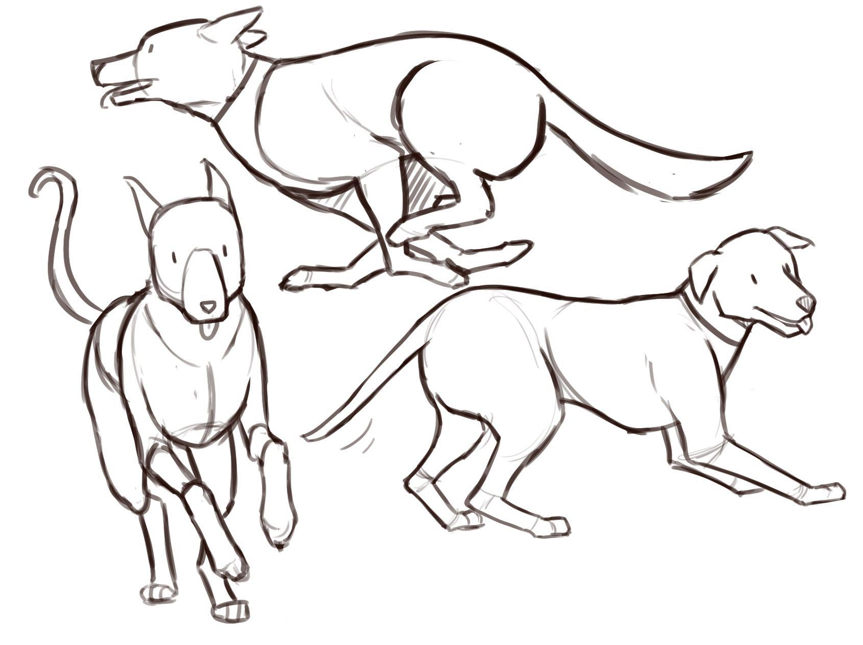 Dog drawing reference
